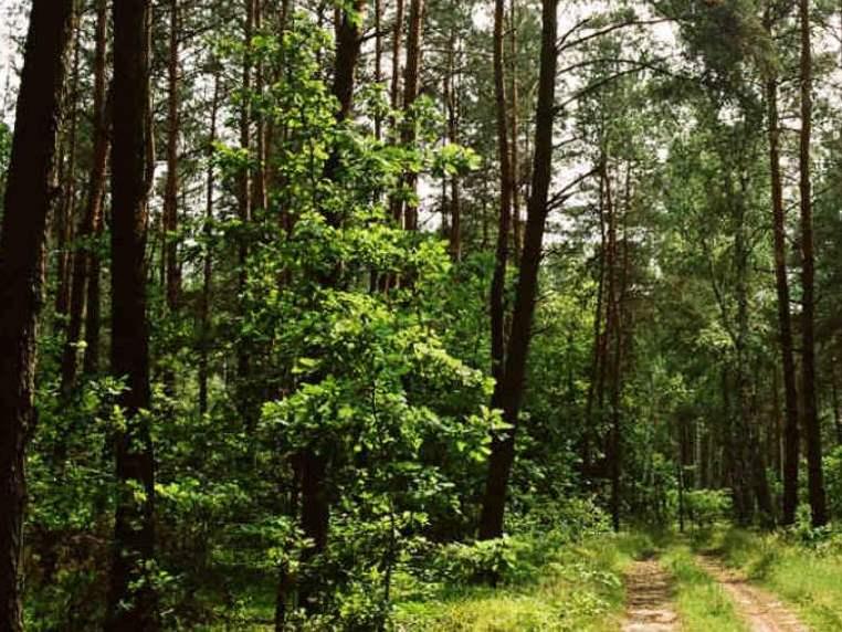 Bogactwo lasów