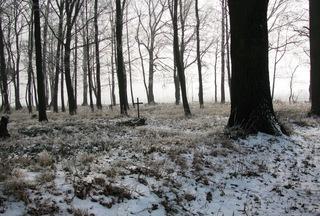 cmentarz w Bzinicy.jpeg